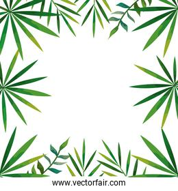 frame of tropical natural leafs isolated icon