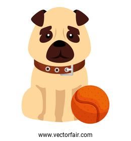 cute dog with ball toy isolated icon