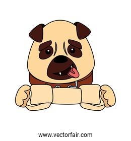 cute dog with bone isolated icon