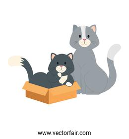 cute little cats with box carton isolated icon