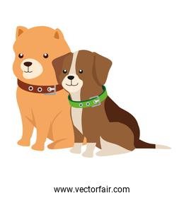 cute dogs animals isolated icon