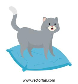 cute little cat in cushion isolated icon