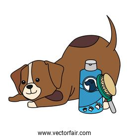 cute dog with bottle for care and brush