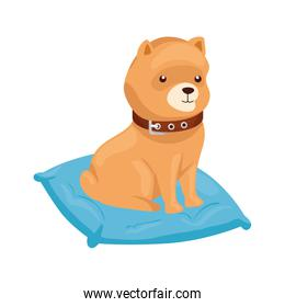 cute dog in cushion isolated icon