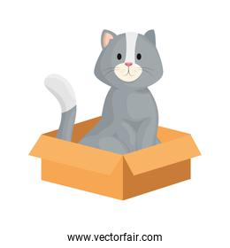 cute little cat in box carton isolated icon