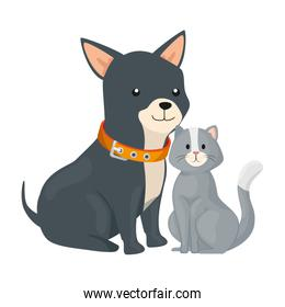 cute cat and dog animals isolated icon