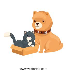 cute dog with cat in box carton