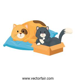 cute little cats in box carton and cushion