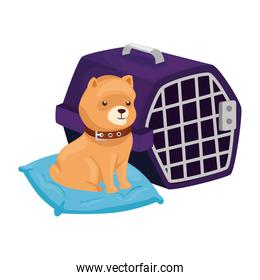 cute dog in cushion and carry box