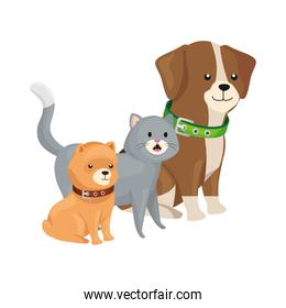 cute cat and dogs animals isolated icon