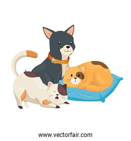 cute cats and dog with cushion isolated icon