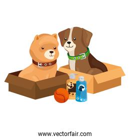 cute dog with objects for care