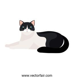 cute cat black and white isolated icon