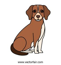 brown dog with white spot isolated icon