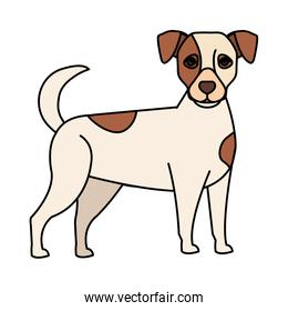white dog with brown spotted isolated icon