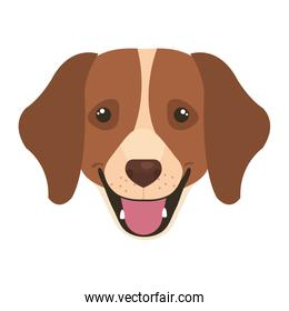 face of brown dog with white spot isolated icon