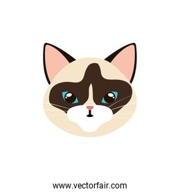 face of cat animal isolated icon