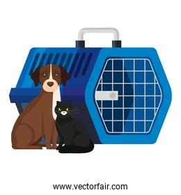 cute dog with cat and pet carry box