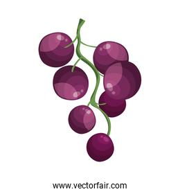 fresh grapes fruits isolated icon