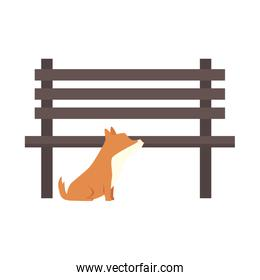 dog with wooden chair of park