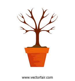 dry tree in pot plant isolated icon