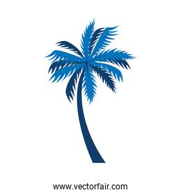 tree palm exotic isolated icon