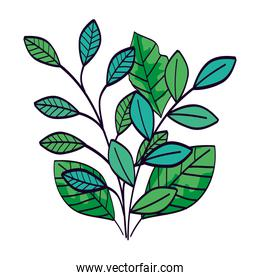 branches with leafs natural isolated icon