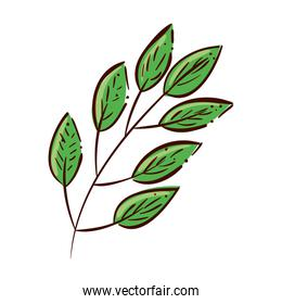 branch with leafs natural isolated icon