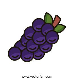 sweet grapes fruits and leafs line and fill style