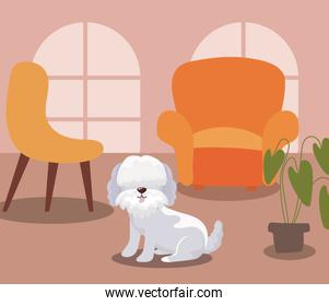 adorable dog in living room