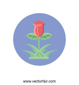 beautiful rose with leaves, block style icon