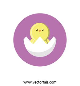 eggshell with cute little chicken, block style icon