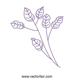 branch leaves foliage botancial nature  icon