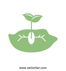 plant seed growing in the ground icon, silhouette style