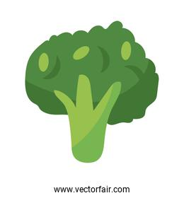 broccoli vegetable icon, flat detail style