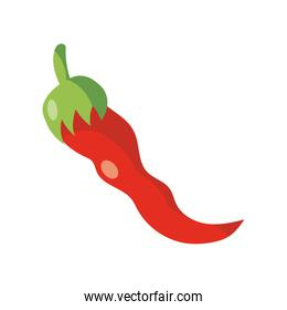red chili icon, flat detail style