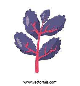 red lettuce icon, flat detail style