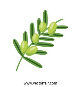 olives branch icon, flat detail style