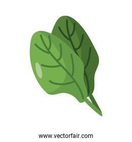 spinach vegetable icon, flat detail style