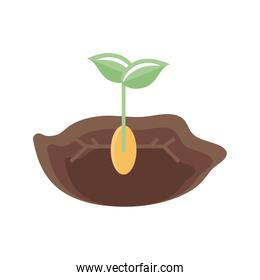 plant seed growing in the ground icon, flat detail style