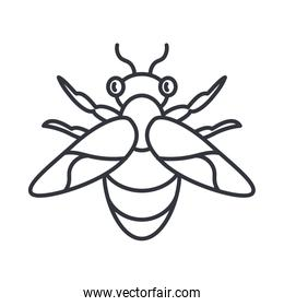 honeybee insect, line detail style icon