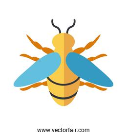 honeybee insect, flat style icon