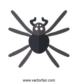 spider insect, flat style icon