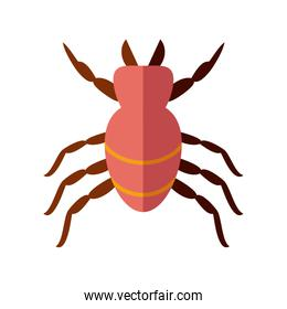 mite insect, flat style icon