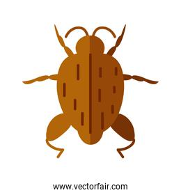 bug insect icon, flat style