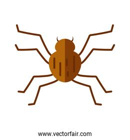 spider insect icon, flat style