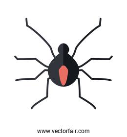 small spider icon, flat style