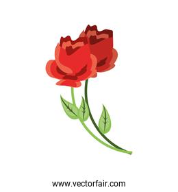 rose with leaf on white background