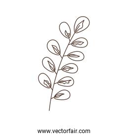 branch leaves foliage botanical isolated icon white background linear design