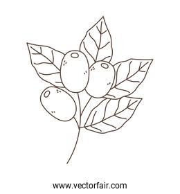 branch foliage seeds coffee isolated icon white background linear design